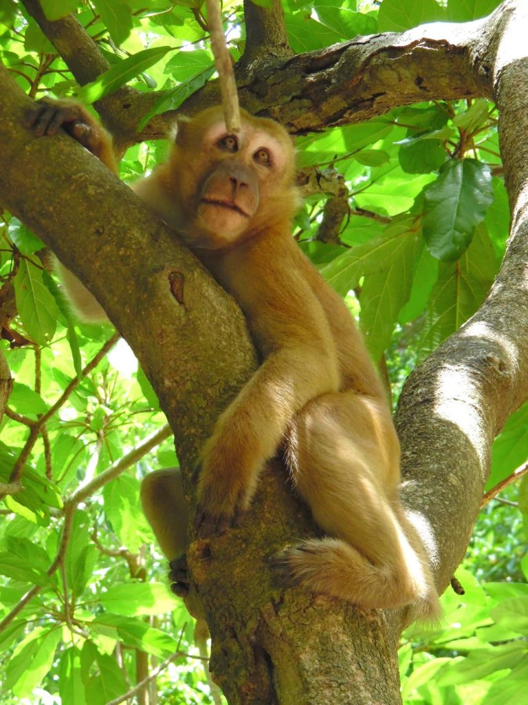 A monkey at in a tree at Erawan Waterfalls in Thailand